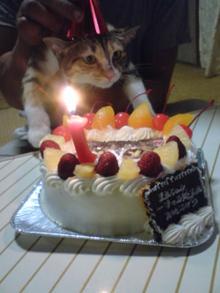 ネコの似顔絵ケーキ