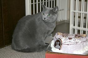 猫の顔型 立体ケーキ