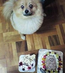ペット 似顔絵 ケーキ