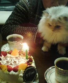 猫の似顔絵ケーキ