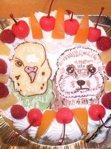インコ、ペットの似顔絵ケーキ