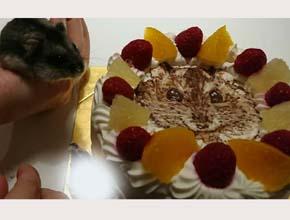 ハムスターのケーキ、結婚記念日、ペットのお誕生日