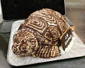 aldabrachelys-zougame-3d-cake.jpg